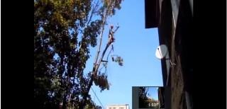 рязане на опасни дървета и клони кастрене