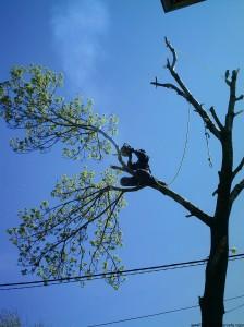 рязане на дървета