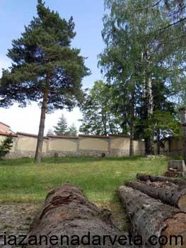 рязане на дървета цена цени