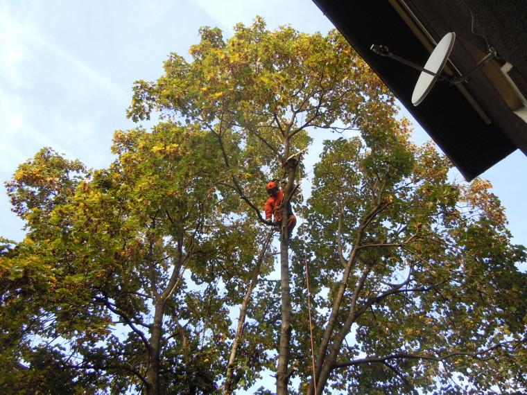 кастрене на дърво
