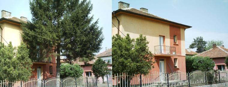 отрязване на дърво
