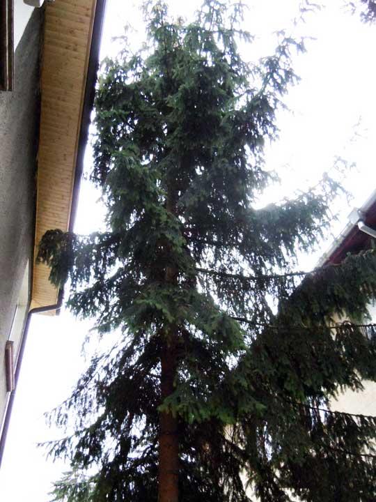 отрязване на дървета
