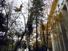 кастрене на дървета