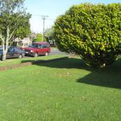трева озеленяване чимове