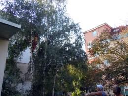 почистване на парцел от храсти и дървета