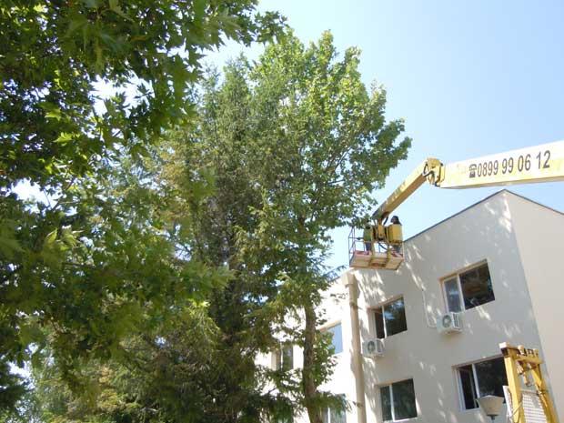 отрязване на дървета с вишка