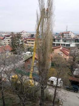 отрязване на опасни дървета топола с вишка