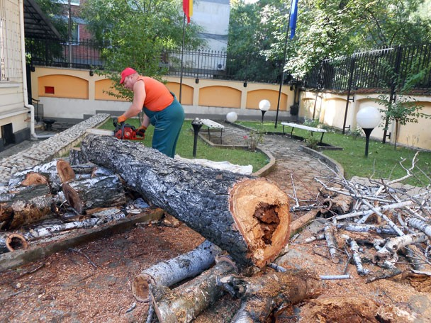 отрязване на изсъхнало дърво