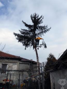 премахване дървета