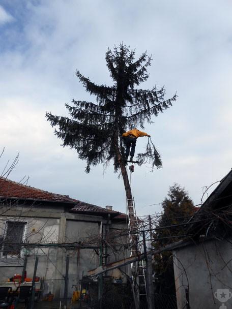 реже дървета