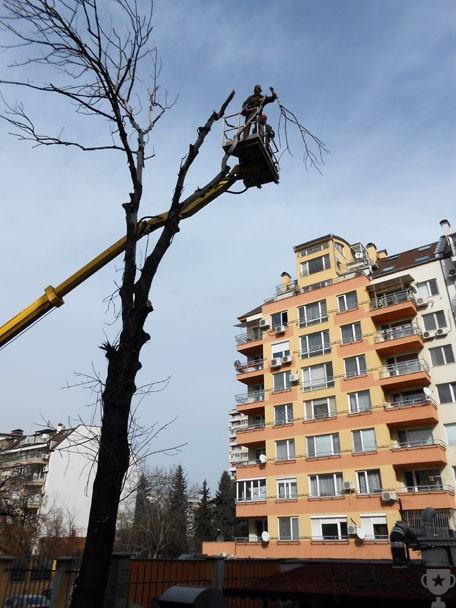 рязане на дърво с вишка