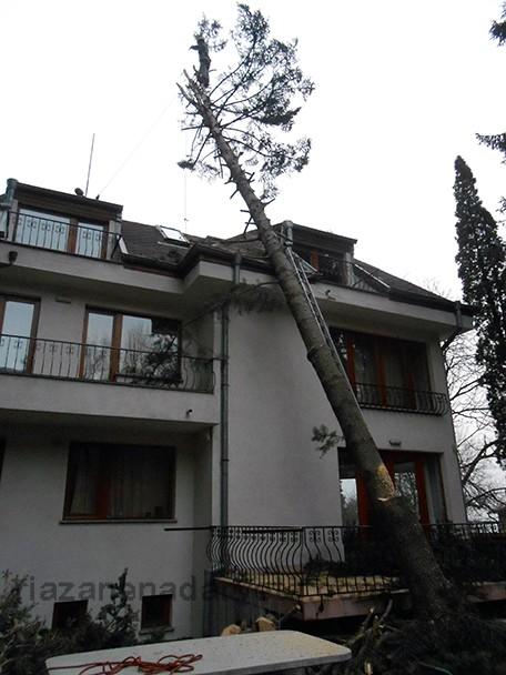 рязане на дърво паднало от вятър