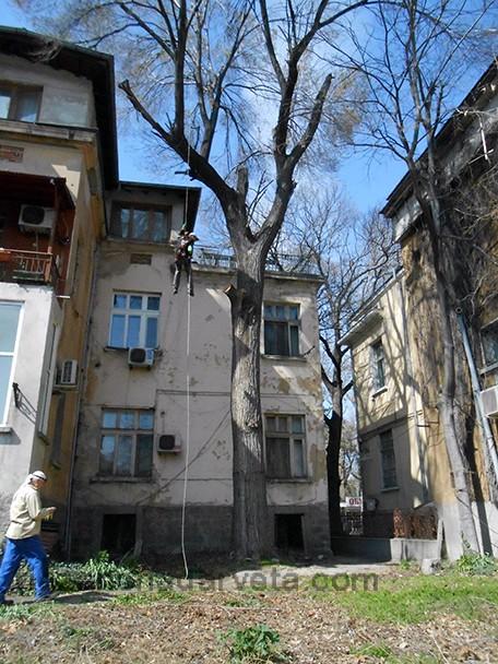 рязане на дърво от алпинисти